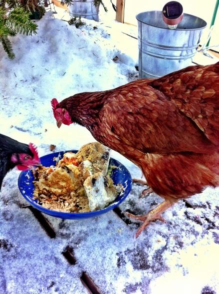 Blackbird and Strawberry Sally feasting