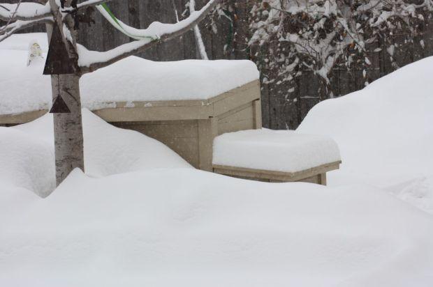 March 5:  Chicken Coop Hidden by Snow
